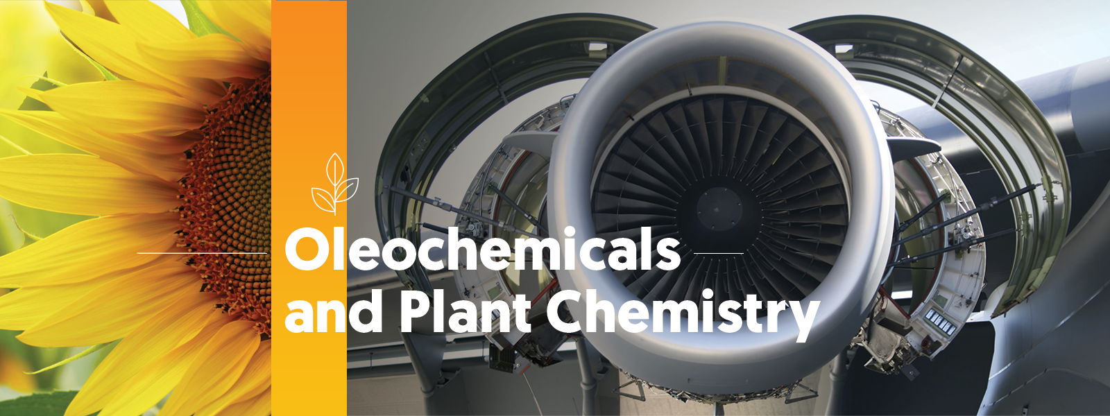 Oleochemicals and plant chemistry